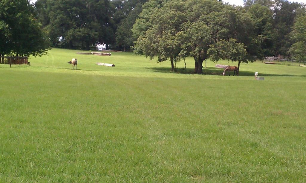 Horse Boardomg - Carousel Farm Trilby